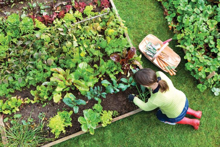 Что можно сажать осенью на огороде 200