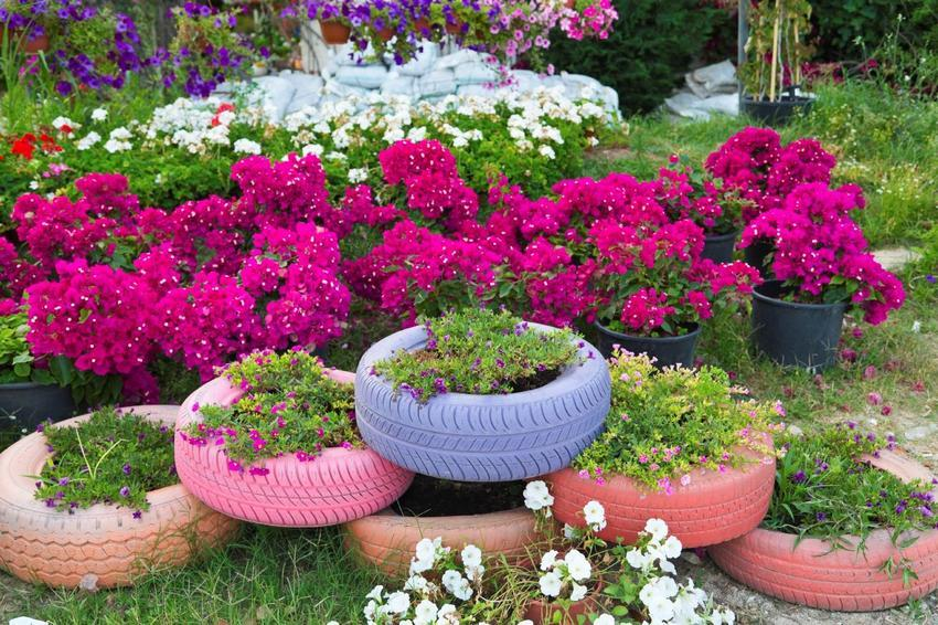 Сажаем цветы в шины 997