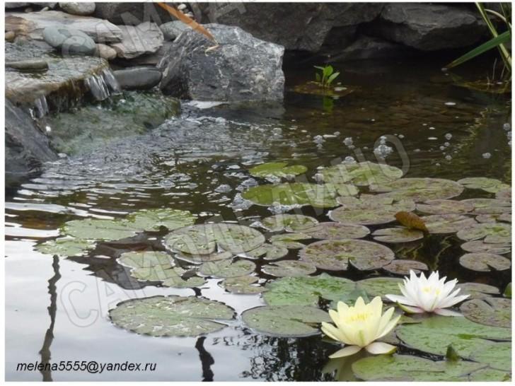 Лилии и водопад
