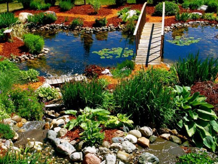 Красочное оформление водоема