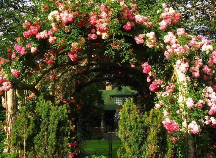 Арки из роз в саду