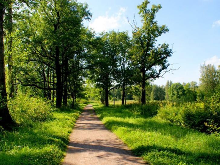 Лесные угодья