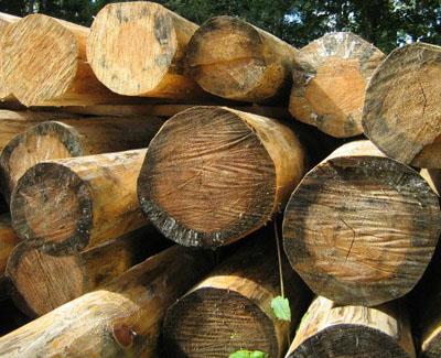 Как отбелить древесину 🧹 и избавить ее от черноты: отбеливающие составы для обработки своими руками