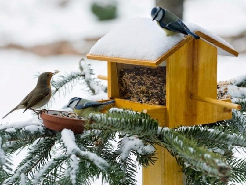 Изготовление кормушек для птиц своими руками
