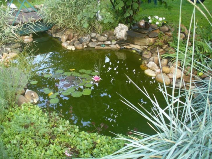 Растительность в пруду