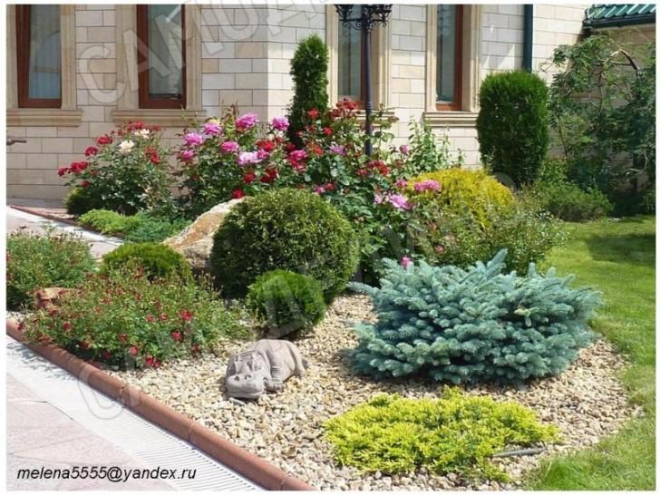 Растения и рокарий