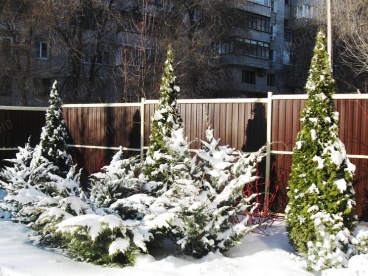 Взрослые растения зимой