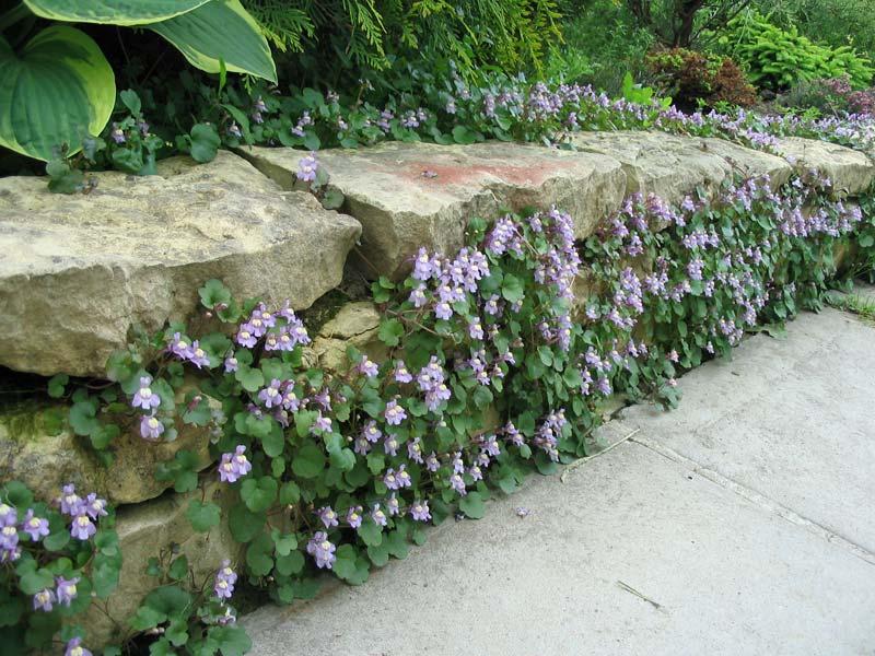 Подпорная стенка с цветами