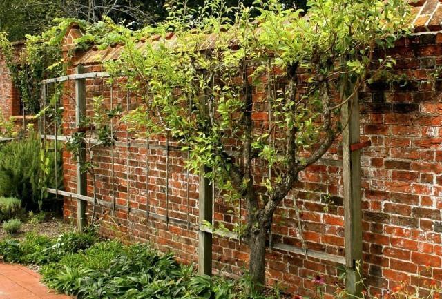 Как сделать виноградник своими руками во дворе