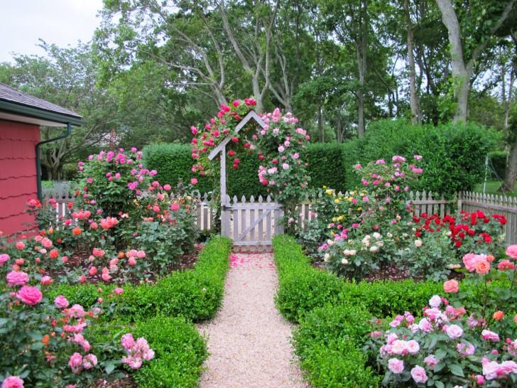 Какие цветы посадить с розами: фото лучших вариантов клумб и других идей || Схема цветника с розами