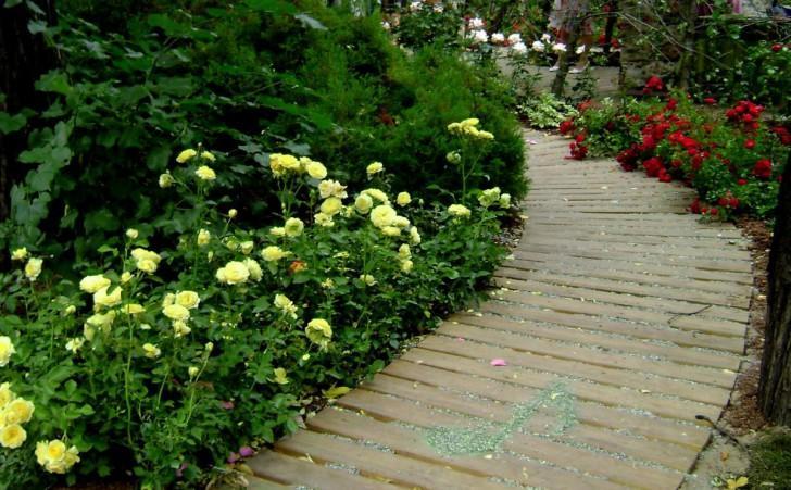 Карликовые розы