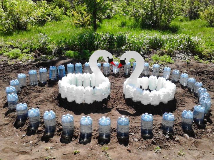 Садовые лебеди