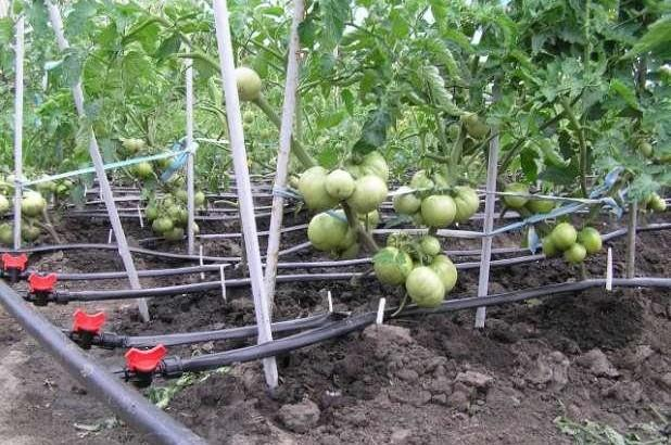 Система полива на даче различные варианты для орошения растений
