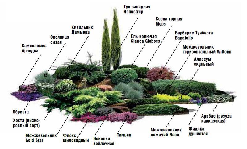 Схема растений