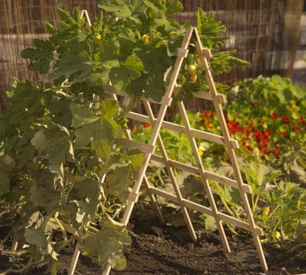 Шпалера своими руками на даче - фото для огурцов, помидоров и гороха
